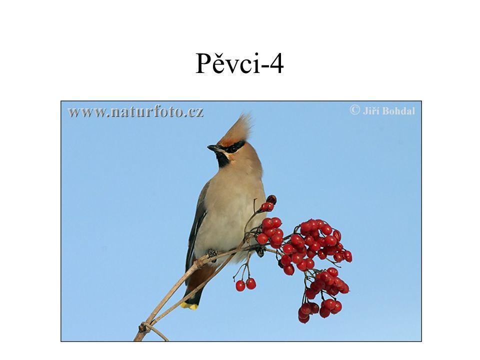 Pěvci-4