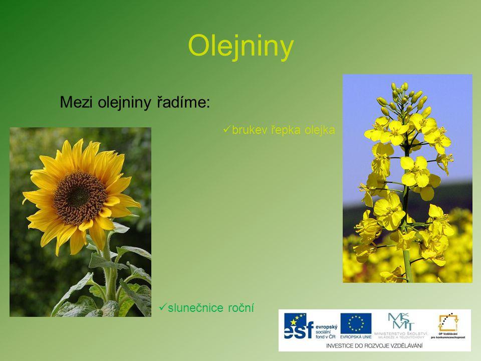 Olejniny  Mák setý  Olivovník Poznáte rostlinu, která u nás neroste, ale jejím neznámějším produktem je olivový olej?