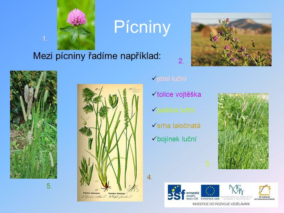 Použití pícnin •Pícniny jsou rostliny, které se pěstují a používají ke krmení hospodářských zvířat.