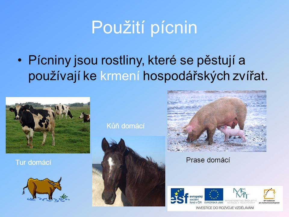 Použití pícnin •Pícniny jsou rostliny, které se pěstují a používají ke krmení hospodářských zvířat. Tur domácí Prase domácí Kůň domácí