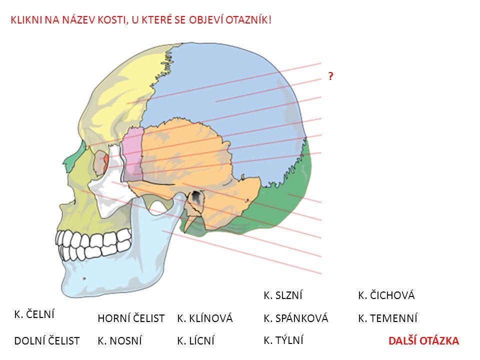 POUŽITÉ OBRÁZKY: • File:Human skull side bones.svg.