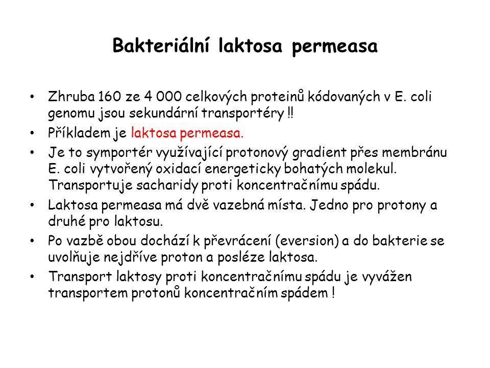 Bakteriální laktosa permeasa • Zhruba 160 ze 4 000 celkových proteinů kódovaných v E. coli genomu jsou sekundární transportéry !! • Příkladem je lakto