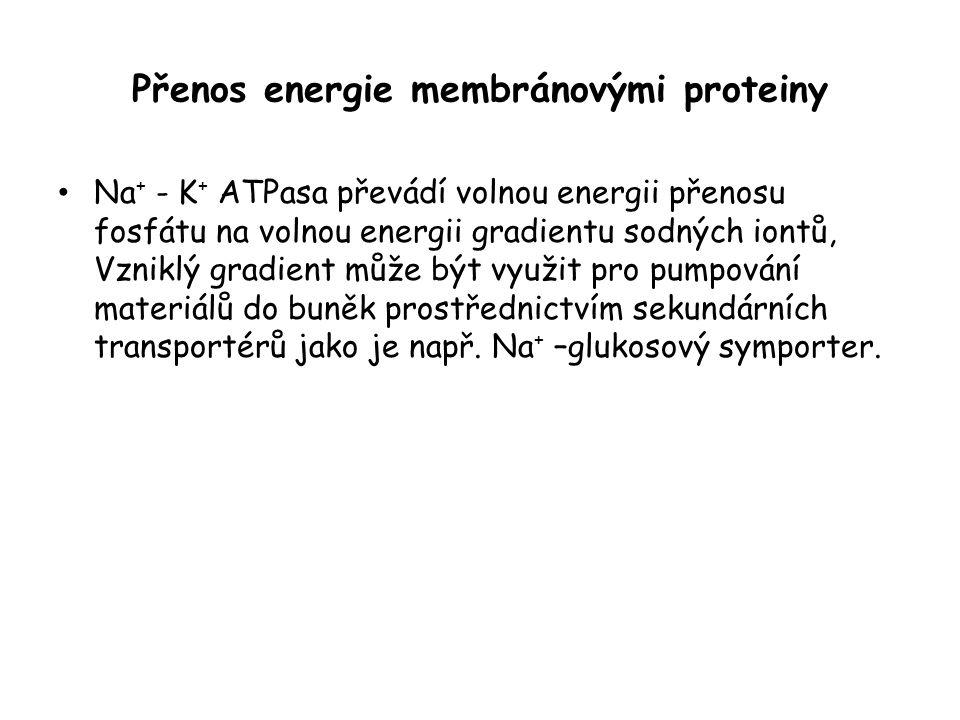 Přenos energie membránovými proteiny • Na + - K + ATPasa převádí volnou energii přenosu fosfátu na volnou energii gradientu sodných iontů, Vzniklý gradient může být využit pro pumpování materiálů do buněk prostřednictvím sekundárních transportérů jako je např.