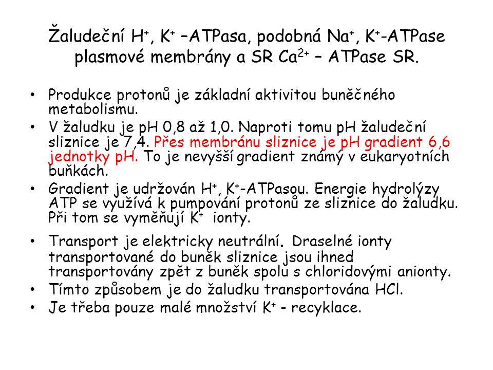 Žaludeční H +, K + –ATPasa, podobná Na +, K + -ATPase plasmové membrány a SR Ca 2+ – ATPase SR. • Produkce protonů je základní aktivitou buněčného met