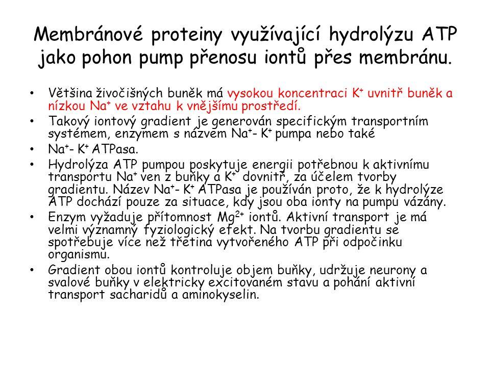 Membránové proteiny využívající hydrolýzu ATP jako pohon pump přenosu iontů přes membránu. • Většina živočišných buněk má vysokou koncentraci K + uvni