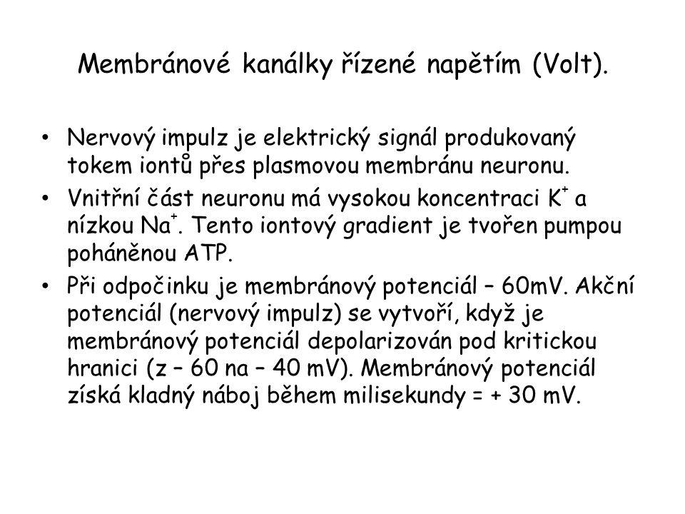 Membránové kanálky řízené napětím (Volt). • Nervový impulz je elektrický signál produkovaný tokem iontů přes plasmovou membránu neuronu. • Vnitřní čás