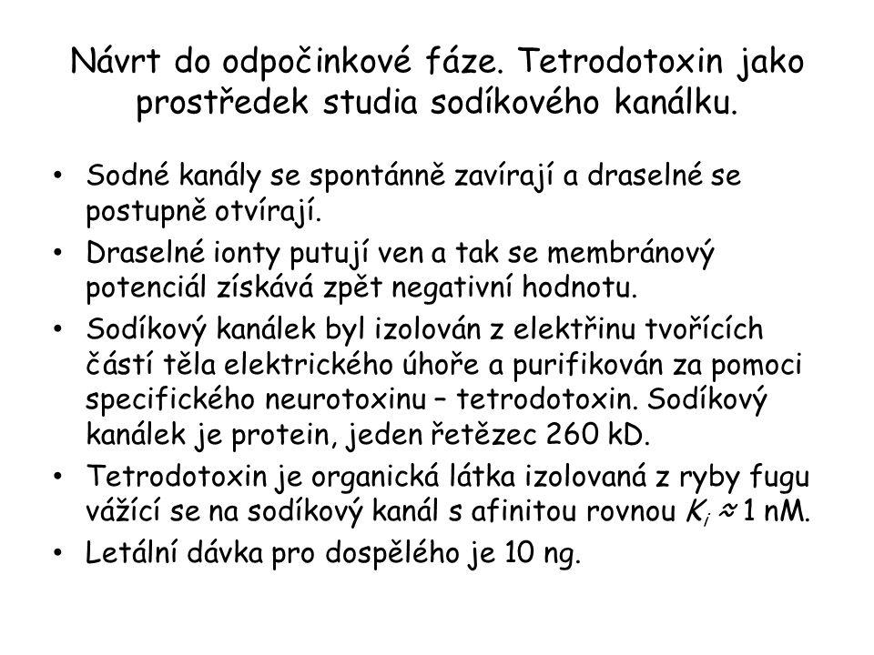 Návrt do odpočinkové fáze. Tetrodotoxin jako prostředek studia sodíkového kanálku. • Sodné kanály se spontánně zavírají a draselné se postupně otvíraj