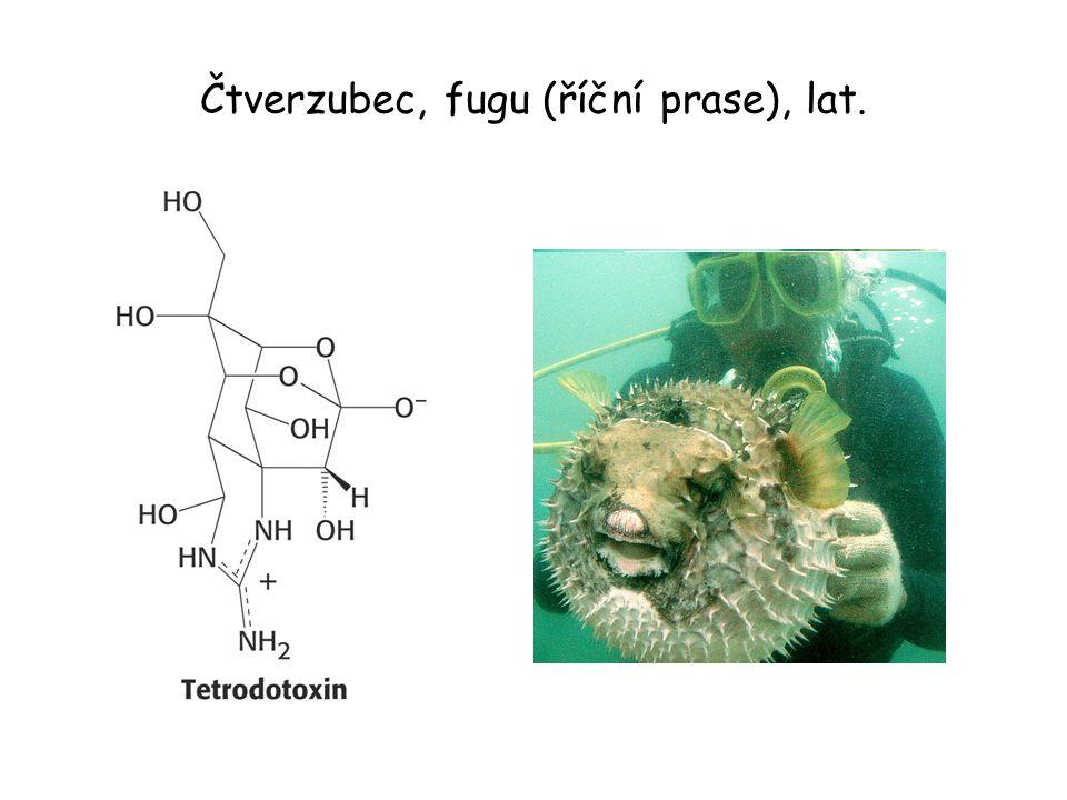 Čtverzubec, fugu (říční prase), lat.
