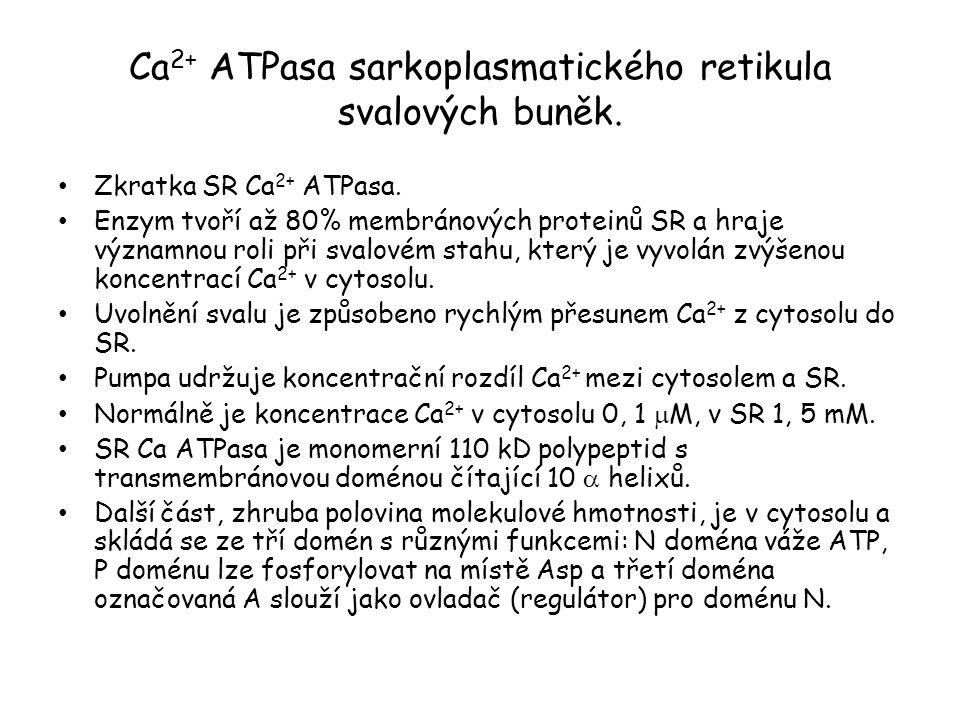 Mechanismus působení ATPasy P-typu. (P, protože tvoří klíčový fosforylovaný meziprodukt).