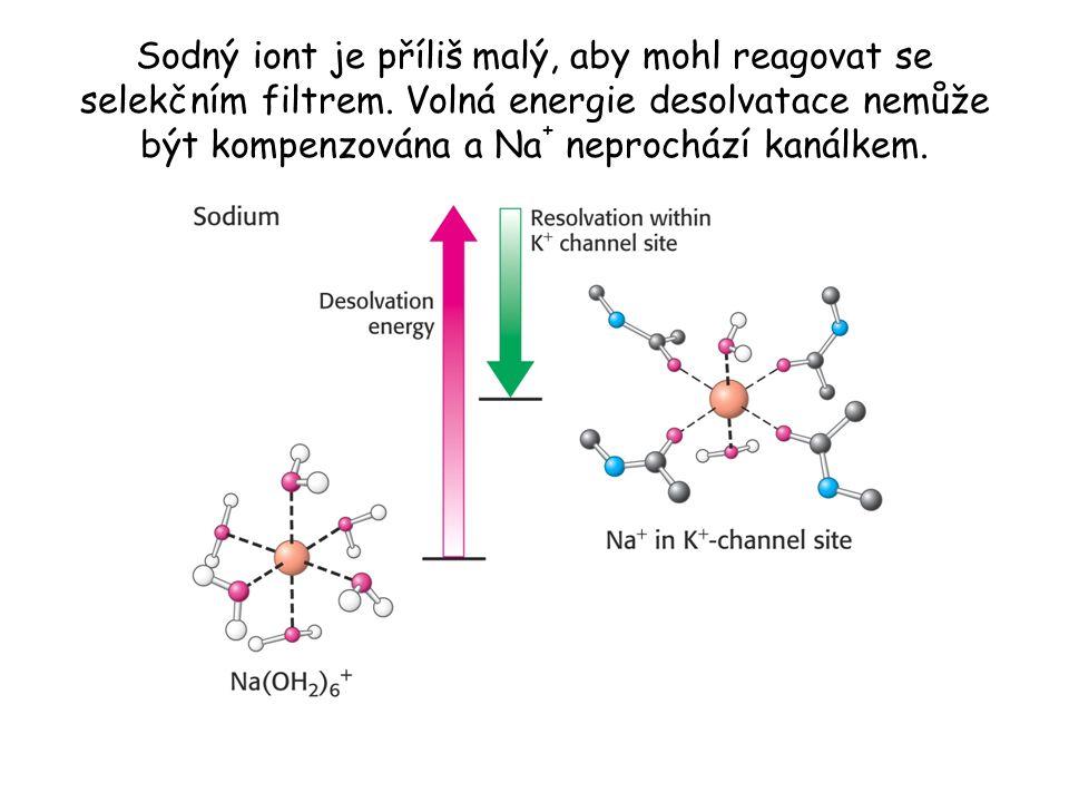 Sodný iont je příliš malý, aby mohl reagovat se selekčním filtrem. Volná energie desolvatace nemůže být kompenzována a Na + neprochází kanálkem.