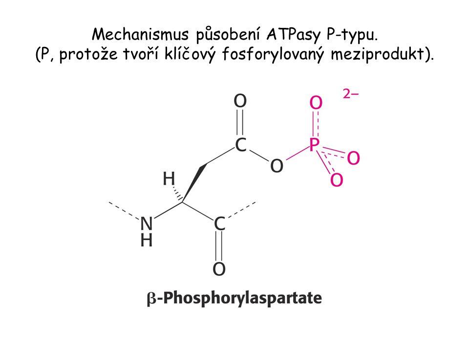 Laktosa permeasa. Transportér pumpuje laktosu do bakteriálních buněk poháněný proton-motivní silou.