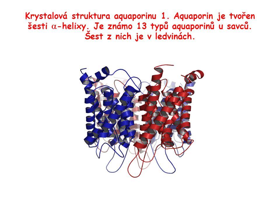 Krystalová struktura aquaporinu 1. Aquaporin je tvořen šesti  -helixy. Je známo 13 typů aquaporinů u savců. Šest z nich je v ledvinách.