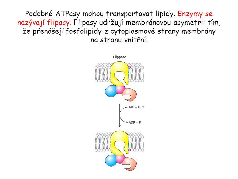 Specifické kanály přes membrány • Iontové kanály jsou dalšími membránovými proteiny s pasivním transportním systémem schopné transportovat ionty až tisíckrát rychleji.
