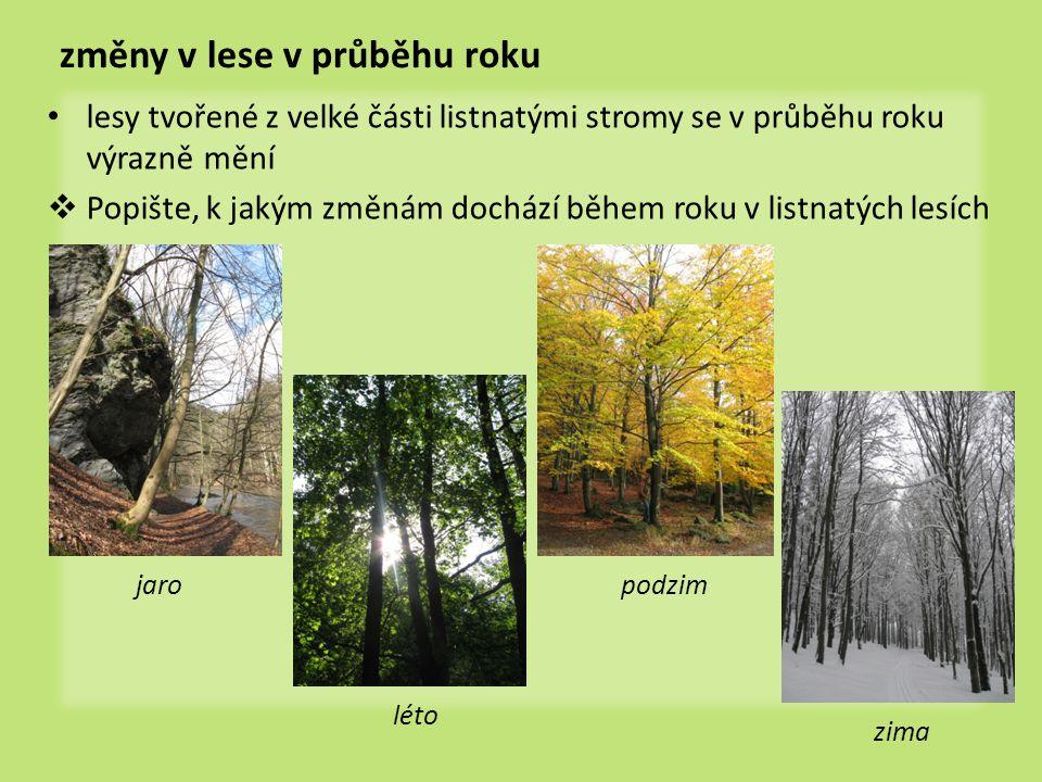 změny v lese v průběhu roku • lesy tvořené z velké části listnatými stromy se v průběhu roku výrazně mění  Popište, k jakým změnám dochází během roku v listnatých lesích jaro léto podzim zima
