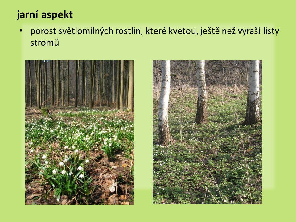jarní aspekt • porost světlomilných rostlin, které kvetou, ještě než vyraší listy stromů