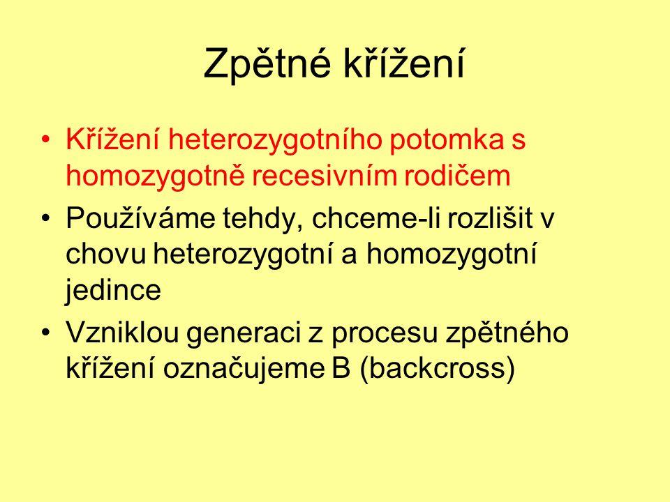 Zpětné křížení •Křížení heterozygotního potomka s homozygotně recesivním rodičem •Používáme tehdy, chceme-li rozlišit v chovu heterozygotní a homozygo