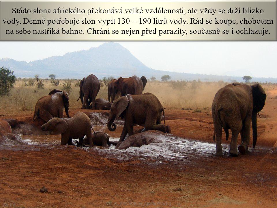 Stádo slona afrického překonává velké vzdálenosti, ale vždy se drží blízko vody. Denně potřebuje slon vypít 130 – 190 litrů vody. Rád se koupe, chobot