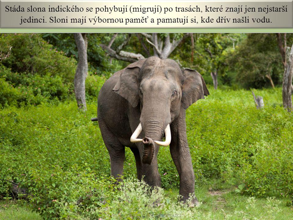 Stáda slona indického se pohybují (migrují) po trasách, které znají jen nejstarší jedinci. Sloni mají výbornou paměť a pamatují si, kde dřív našli vod