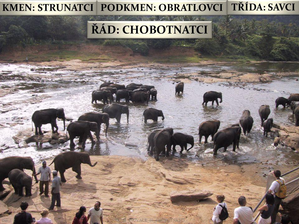 VY_32_INOVACE_ 19 - CHOBOTNATCI14 Obr.č. 13 Slon indický se rád koupe.