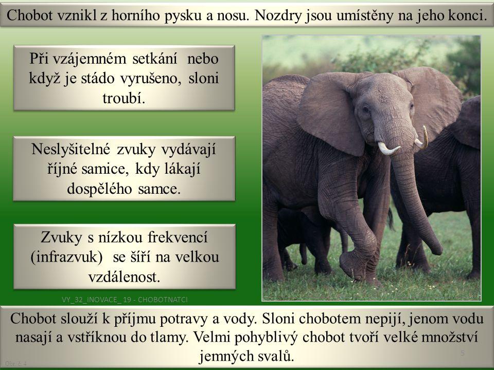 Chobot slouží k příjmu potravy a vody. Sloni chobotem nepijí, jenom vodu nasají a vstříknou do tlamy. Velmi pohyblivý chobot tvoří velké množství jemn
