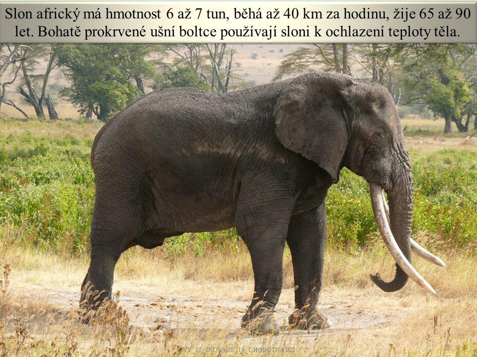 Slon africký má hmotnost 6 až 7 tun, běhá až 40 km za hodinu, žije 65 až 90 let. Bohatě prokrvené ušní boltce používají sloni k ochlazení teploty těla