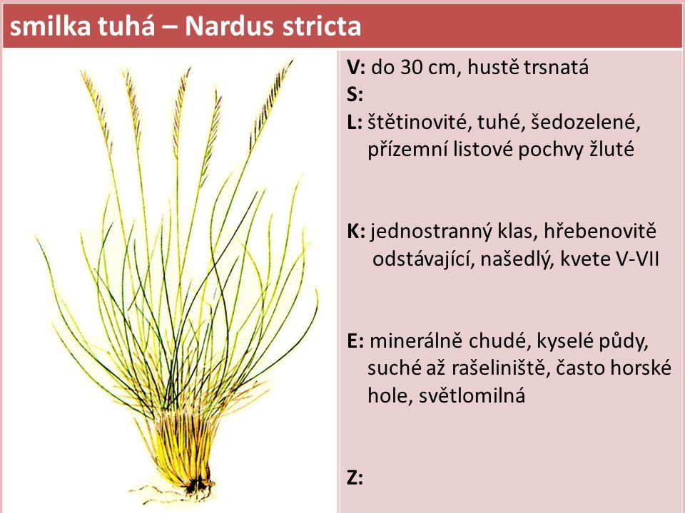 smilka tuhá – Nardus stricta V: do 30 cm, hustě trsnatá S: L: štětinovité, tuhé, šedozelené, přízemní listové pochvy žluté K: jednostranný klas, hřebe