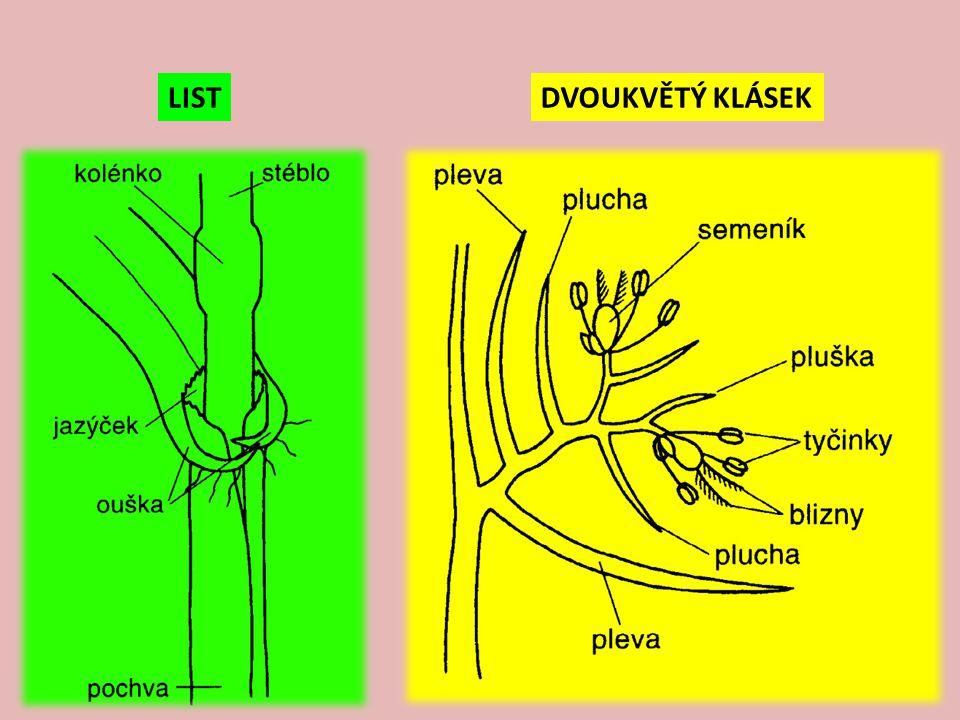 smilka tuhá – Nardus stricta V: do 30 cm, hustě trsnatá S: L: štětinovité, tuhé, šedozelené, přízemní listové pochvy žluté K: jednostranný klas, hřebenovitě odstávající, našedlý, kvete V-VII E: minerálně chudé, kyselé půdy, suché až rašeliniště, často horské hole, světlomilná Z: