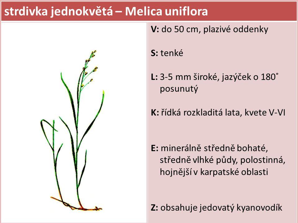 srha laločnatá (říznačka) – Dactylis glomerata V: do 1,5 m, trsnatá S: L: 5-10 mm široké, šedozelené, drsné, čepel s výrazným kýlem (hlubokou střední rýhou) pochvy listů zploštělé K: klásky klubkovitě nahloučené na konci větévek, kvete V-VII E: minerálně středně bohaté, středně vlhké půdy, světlomilná Z: