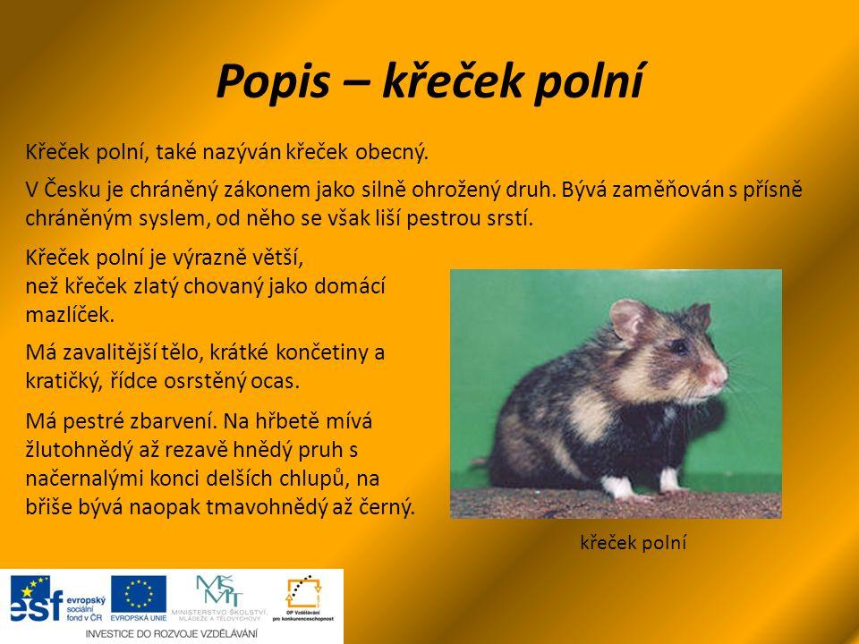 Popis – křeček polní křeček polní Křeček polní, také nazýván křeček obecný. V Česku je chráněný zákonem jako silně ohrožený druh. Bývá zaměňován s pří