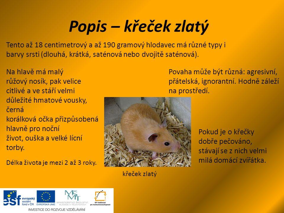 Popis – křeček zlatý křeček zlatý Tento až 18 centimetrový a až 190 gramový hlodavec má různé typy i barvy srsti (dlouhá, krátká, saténová nebo dvojit