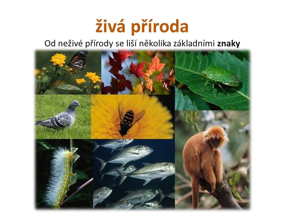 živá příroda Od neživé přírody se liší několika základními znaky