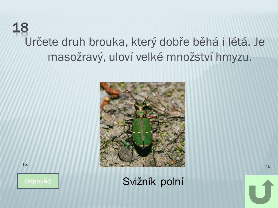 Určete druh brouka, který dobře běhá i létá. Je masožravý, uloví velké množství hmyzu. Odpověď Svižník polní 15. 16.