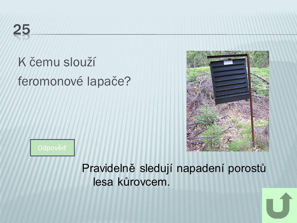 K čemu slouží feromonové lapače? Odpověď Pravidelně sledují napadení porostů lesa kůrovcem.