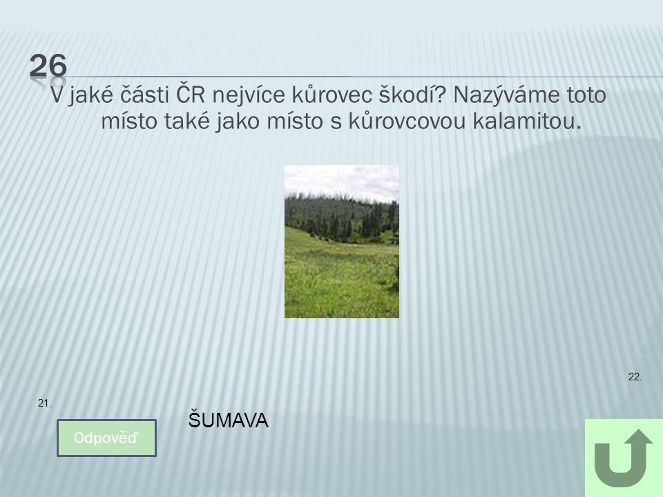 V jaké části ČR nejvíce kůrovec škodí? Nazýváme toto místo také jako místo s kůrovcovou kalamitou. Odpověď ŠUMAVA 22. 21.