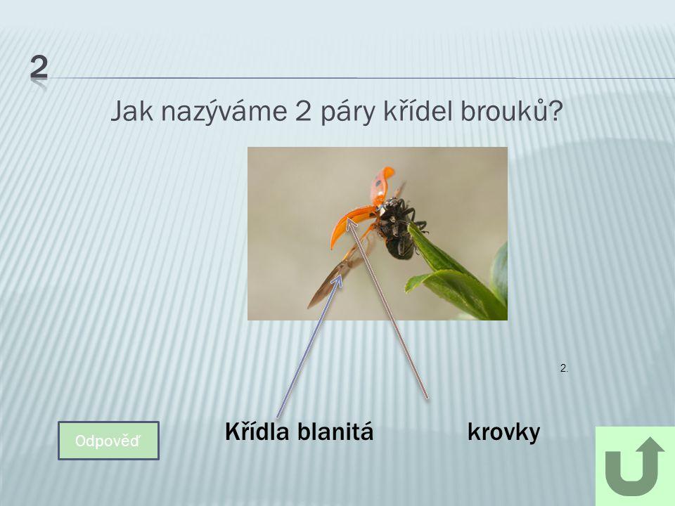 Brouci jsou hmyz s proměnou……… Odpověď Dokonalou 3.