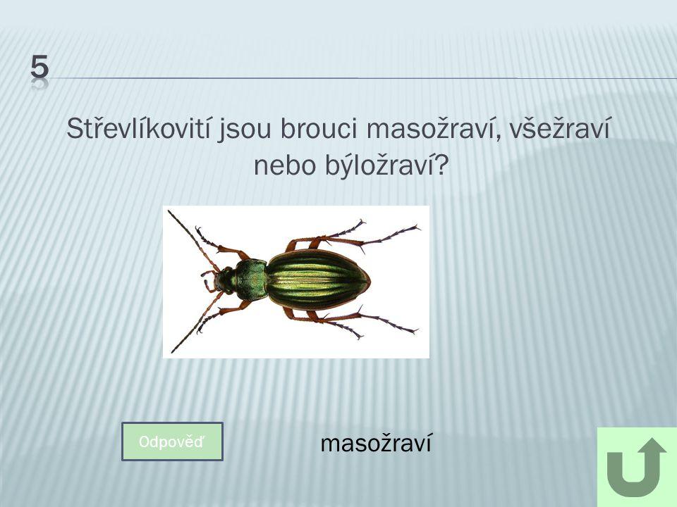 Jaký je největší brouk v ČR? Odpověď Roháč obecný 5.