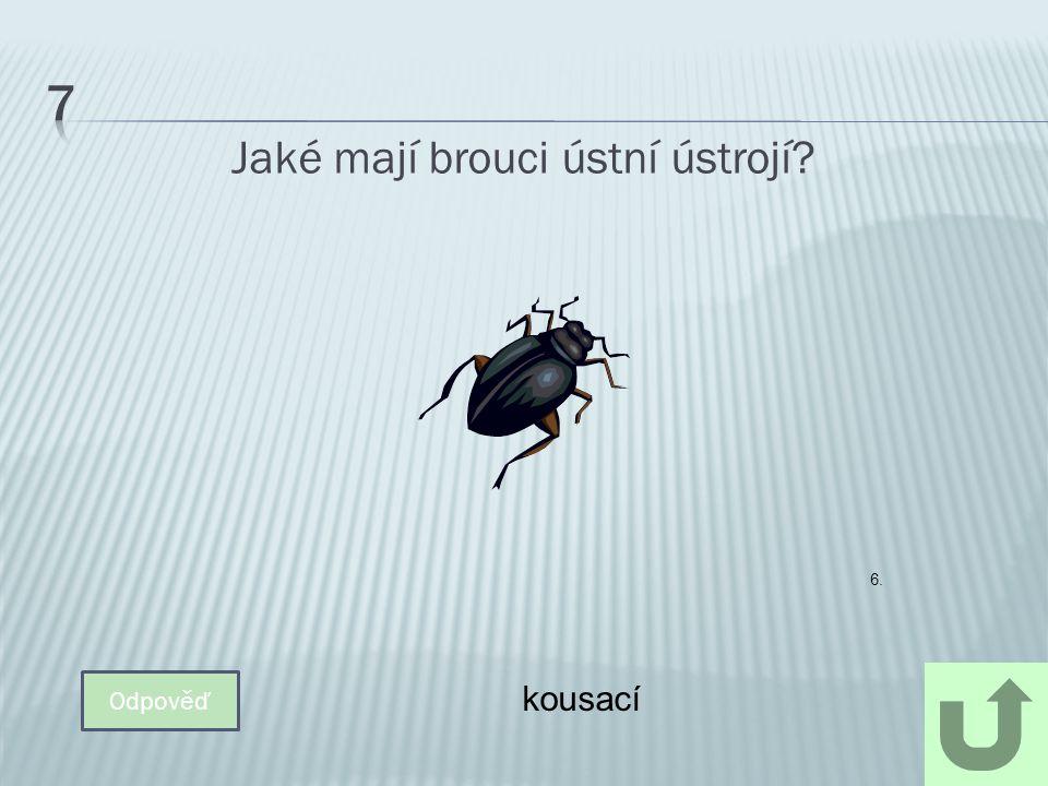 Určete druh brouka, který dobře běhá i létá.Je masožravý, uloví velké množství hmyzu.