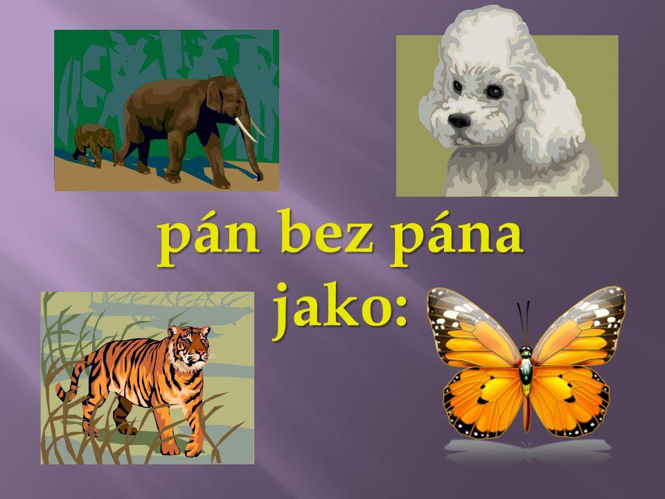 v lese, lvi, pod ubrusy, k cíli, se psy, plazi, k učiteli, na drápech, o koni, sousedovi, do dolů, drahokamy, meči, pro ptáčky, se sněhuláky, při lovu, lvi plazi sousedovi ptáček sněhulák psi