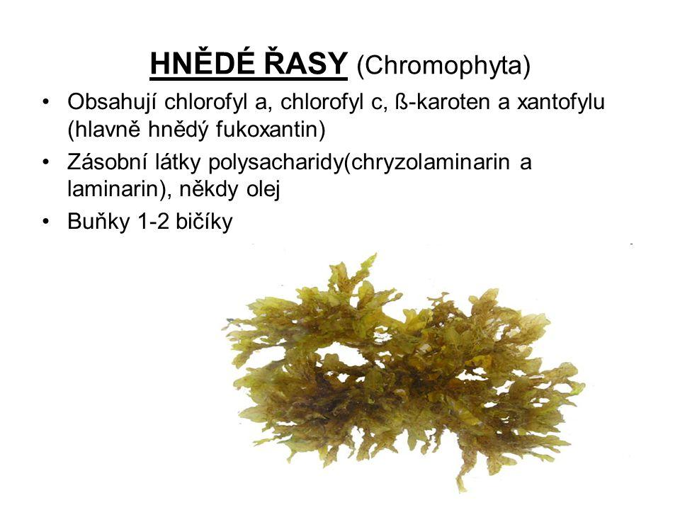 Třída : ROZSIVKY (Bacillariophyceae) •Druhově nejpočetnější hnědé řasy •Charakteristické znaky: jednobuněčná kokální mikroskopická stélka, dvoudílné křemité schránky •Žijí v koloniích nebo jednotlivě •Rozmnožují se dělením, při němž dojde ke zmenšení schránky, původní velikost se obnovuje při pohlavním procesu •Rozšířené ve všech typech vod, ale i v půdě •Bioindikátory znečištění vody •Druhohorní a třetihorní schránky rozsivek vytvořili křemelinu, která se využívá na výrobu skla, filtrů, izolačních hmot..