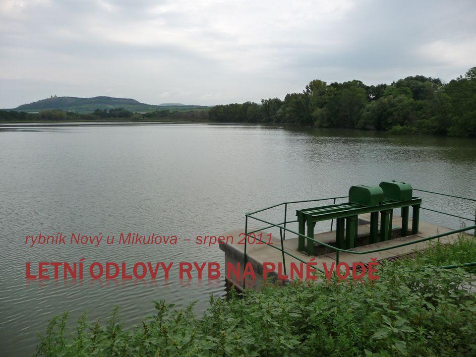 rybník Nový u Mikulova – srpen 2011