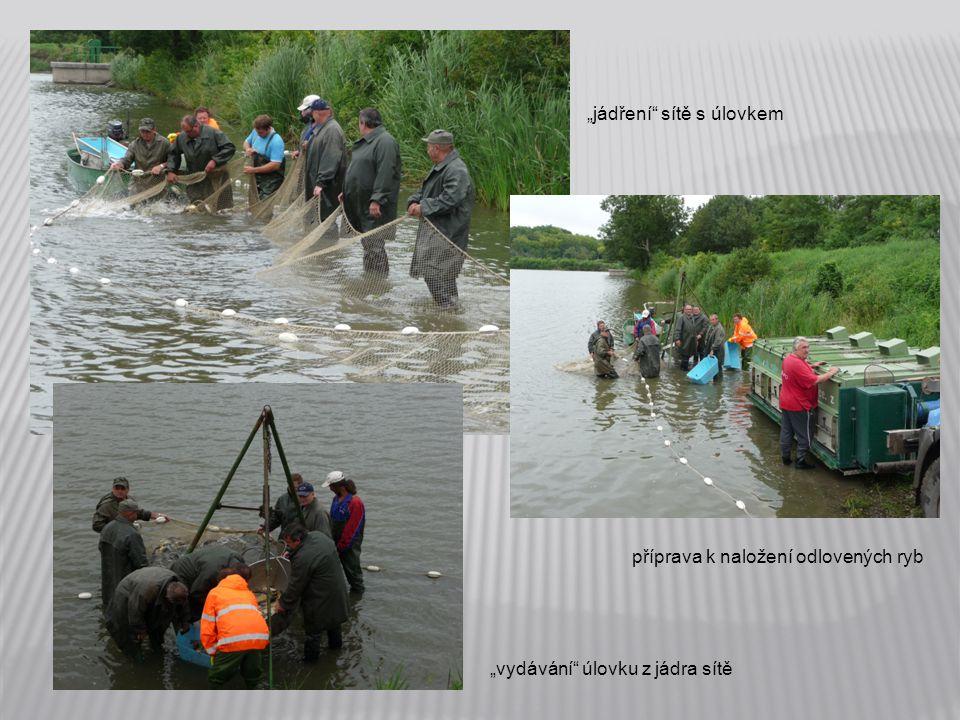 """""""jádření sítě s úlovkem příprava k naložení odlovených ryb """"vydávání úlovku z jádra sítě"""