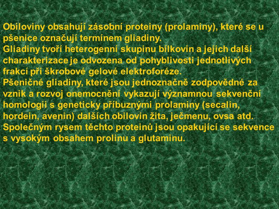 Gluten = gliadiny + gluteniny (zásobní proteiny) Mouka – gluten – gliadin Gliadiny = pšeničné prolaminy Pšeničná mouka ▼ Škroby Proteiny Tuky Cukry Gluten 72% 11% 2% ▼     Albuminy Globuliny Gliadiny Gluteniny Rozpusné, soli Rozpustné,soli Alkohol solubilní Nerozpustné 16% 14% 27% 43% ▼ α gliadiny β gliadiny γ gliadiny ω gliadiny 15% 35% 27% 23%