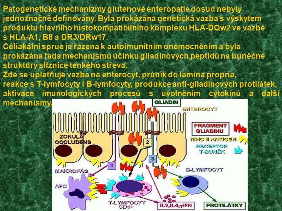  Chronické/ opakované průjmy  Slabost  Podvýživa  Zvracení  Vzedmuté břicho  Opakované bolesti břicha  Hypoplasie zubní skloviny  Opakovaná stomatitida  Nechutenství  Zvýšená hladina transamináz v séru  Zácpa Populace se zvýšeným rizikem
