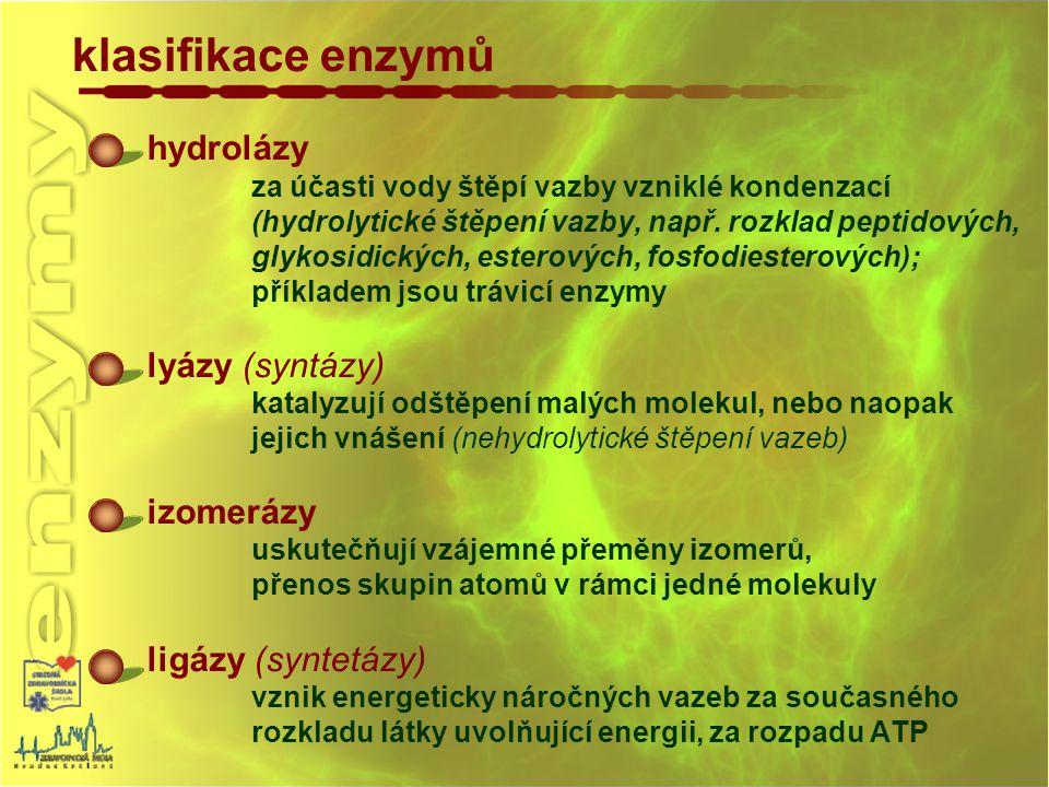 klasifikace enzymů hydrolázy za účasti vody štěpí vazby vzniklé kondenzací (hydrolytické štěpení vazby, např. rozklad peptidových, glykosidických, est