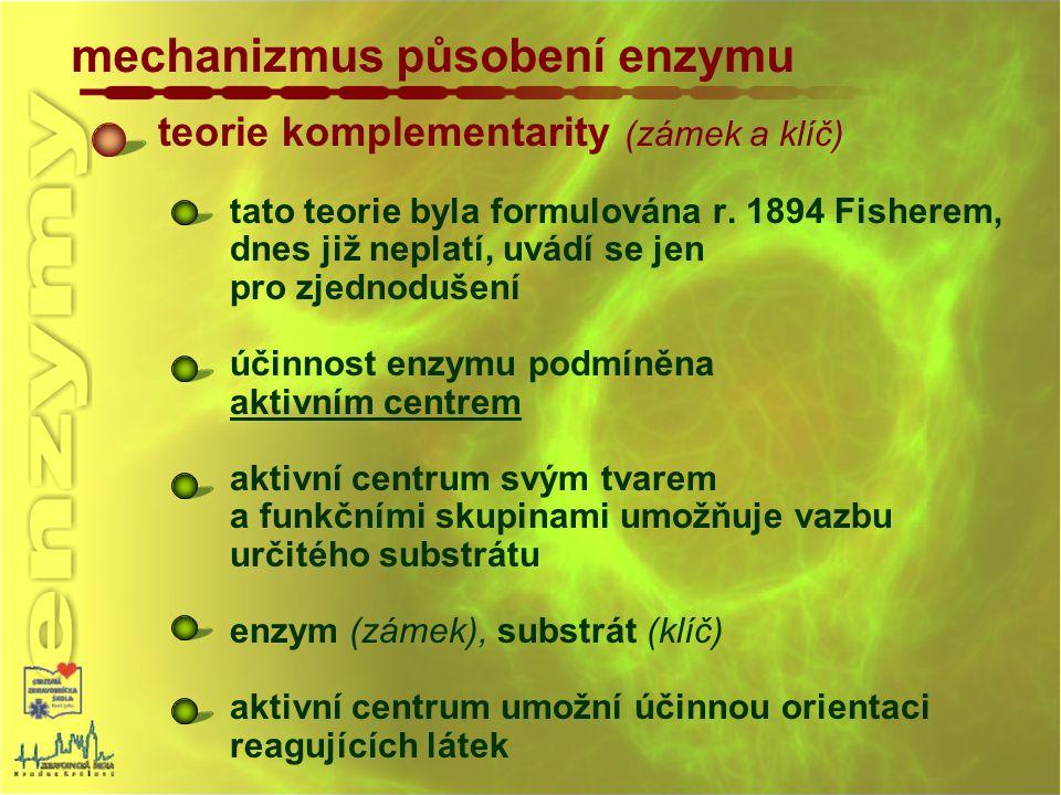 mechanizmus působení enzymu teorie komplementarity (zámek a klíč) tato teorie byla formulována r. 1894 Fisherem, dnes již neplatí, uvádí se jen pro zj