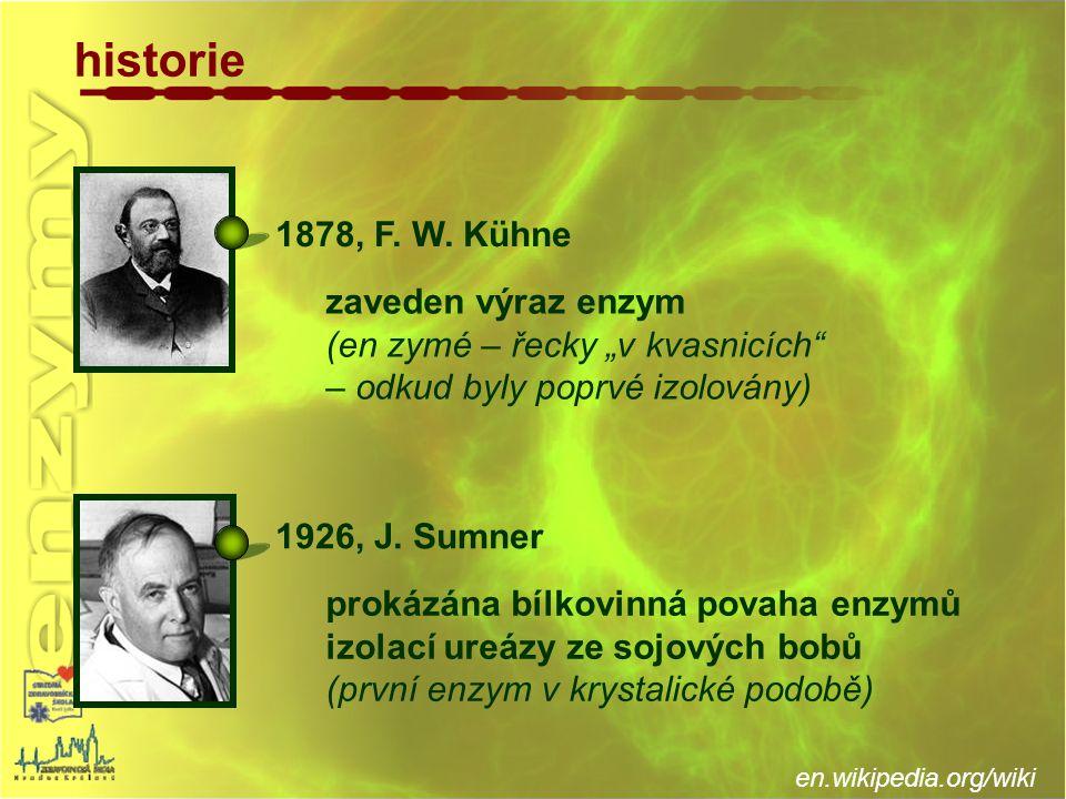 """historie prokázána bílkovinná povaha enzymů izolací ureázy ze sojových bobů (první enzym v krystalické podobě) zaveden výraz enzym (en zymé – řecky """"v"""