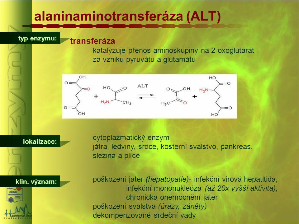 typ enzymu: alaninaminotransferáza (ALT) transferáza katalyzuje přenos aminoskupiny na 2-oxoglutarát za vzniku pyruvátu a glutamátu lokalizace: cytopl