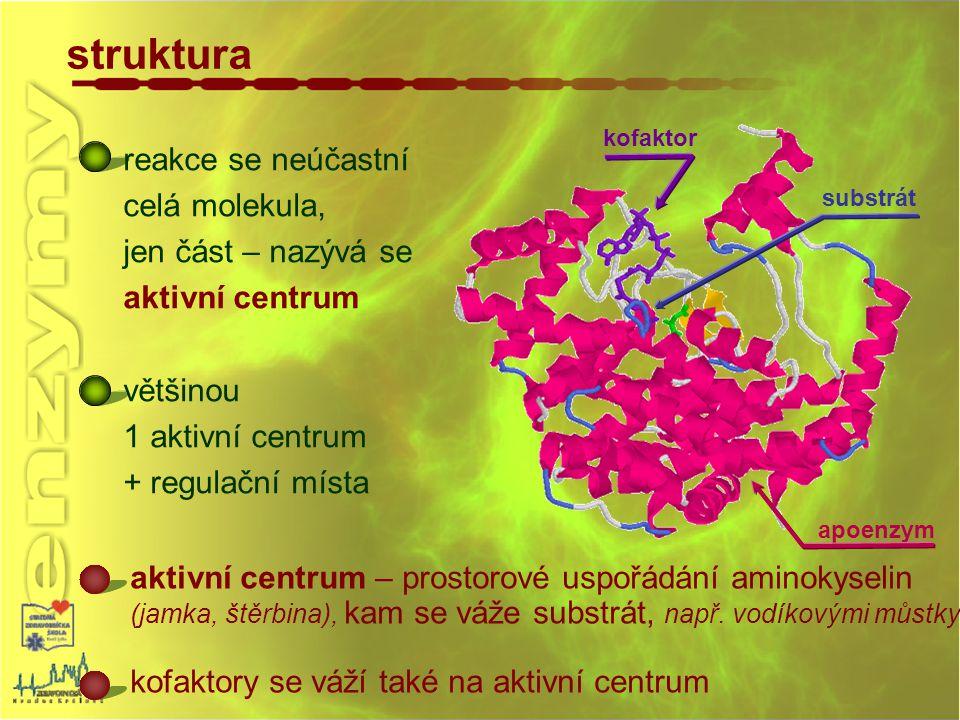 kofaktor substrát apoenzym struktura reakce se neúčastní celá molekula, jen část – nazývá se aktivní centrum většinou 1 aktivní centrum + regulační mí