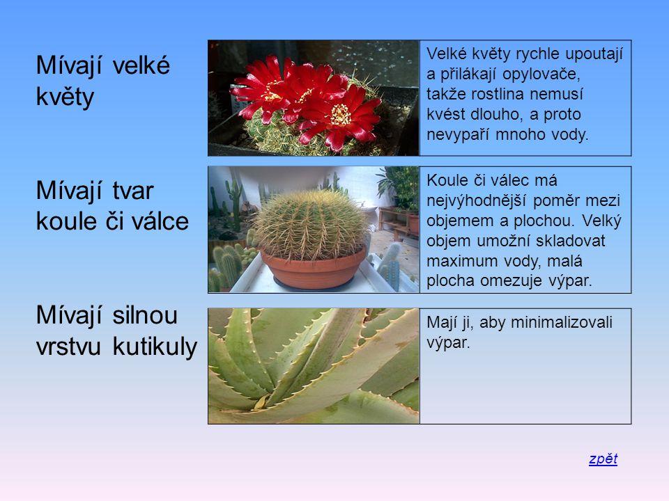 Velké květy rychle upoutají a přilákají opylovače, takže rostlina nemusí kvést dlouho, a proto nevypaří mnoho vody. Mívají velké květy Mívají tvar kou