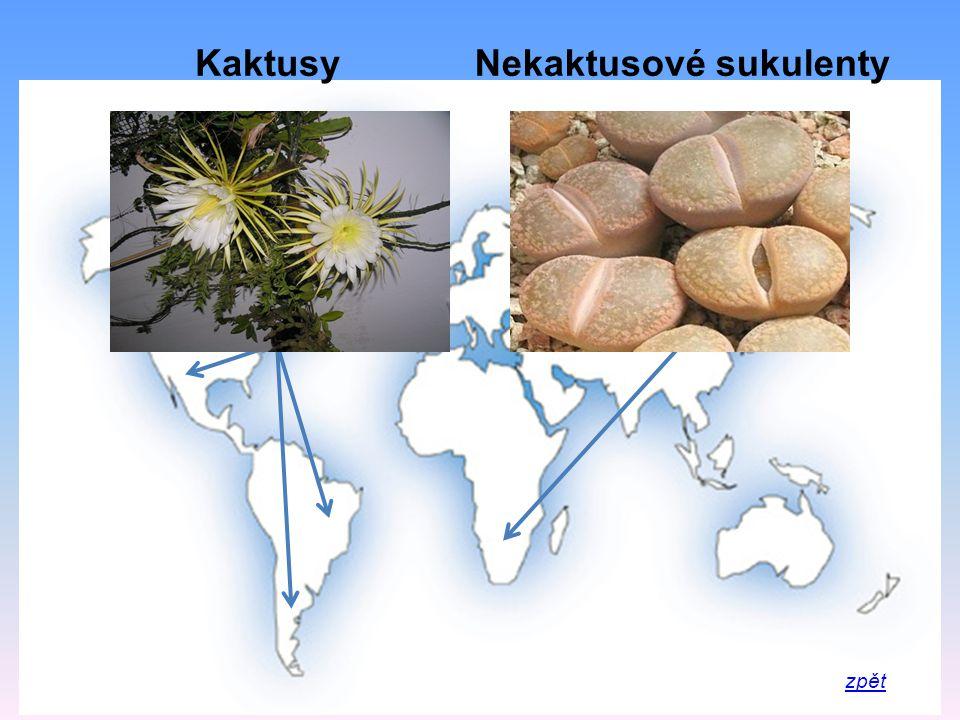 KaktusyNekaktusové sukulenty
